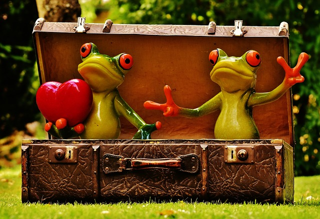frogs, homesickness, travel